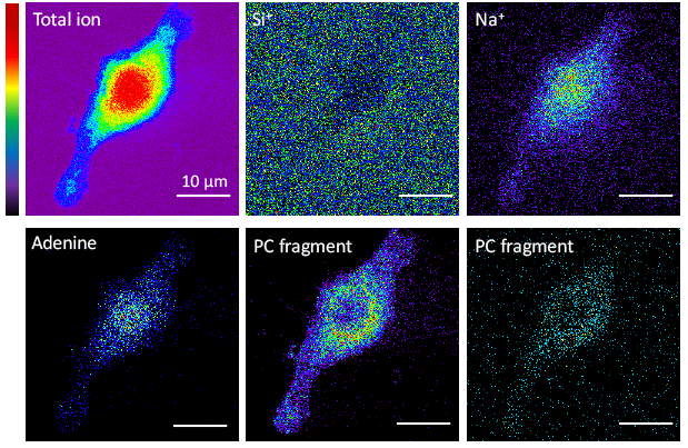 Tof-SIMS imaging at the Materials Characterization Lab at Penn State