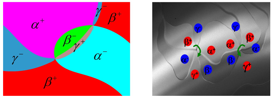 Ferroelectric domains in hexagonal YMnO3 from (left) phase-field simulations and (right)