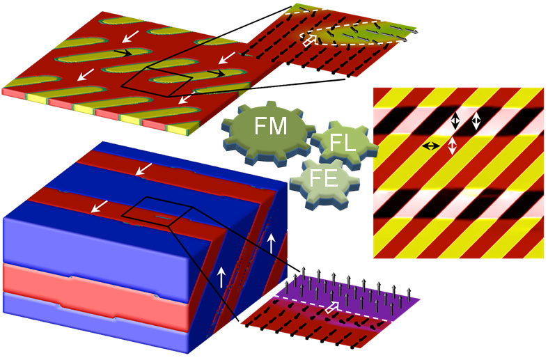 Locally coupled ferromagnetic (FM), ferroelectric (FE), and ferroelastic (FL) domains in a heterostructure